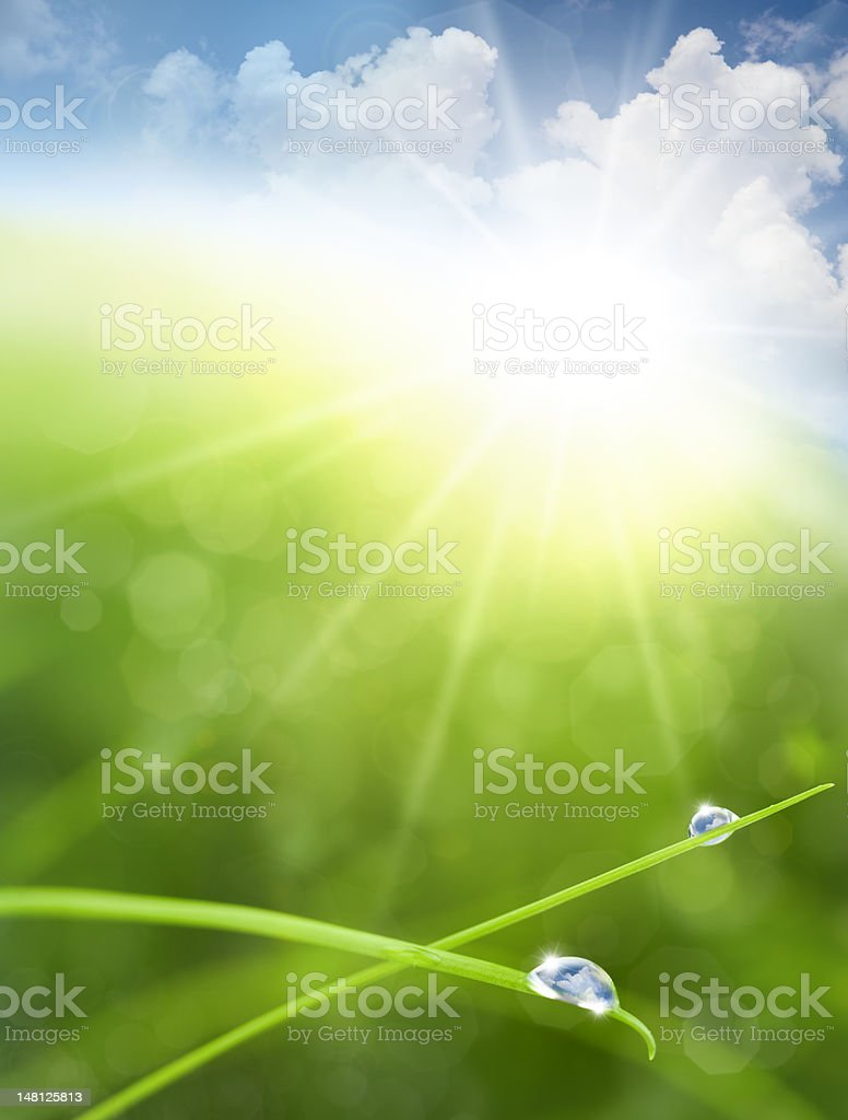 Eco background with Sky, Grass, Water Drops and Cloud reflection stock photo