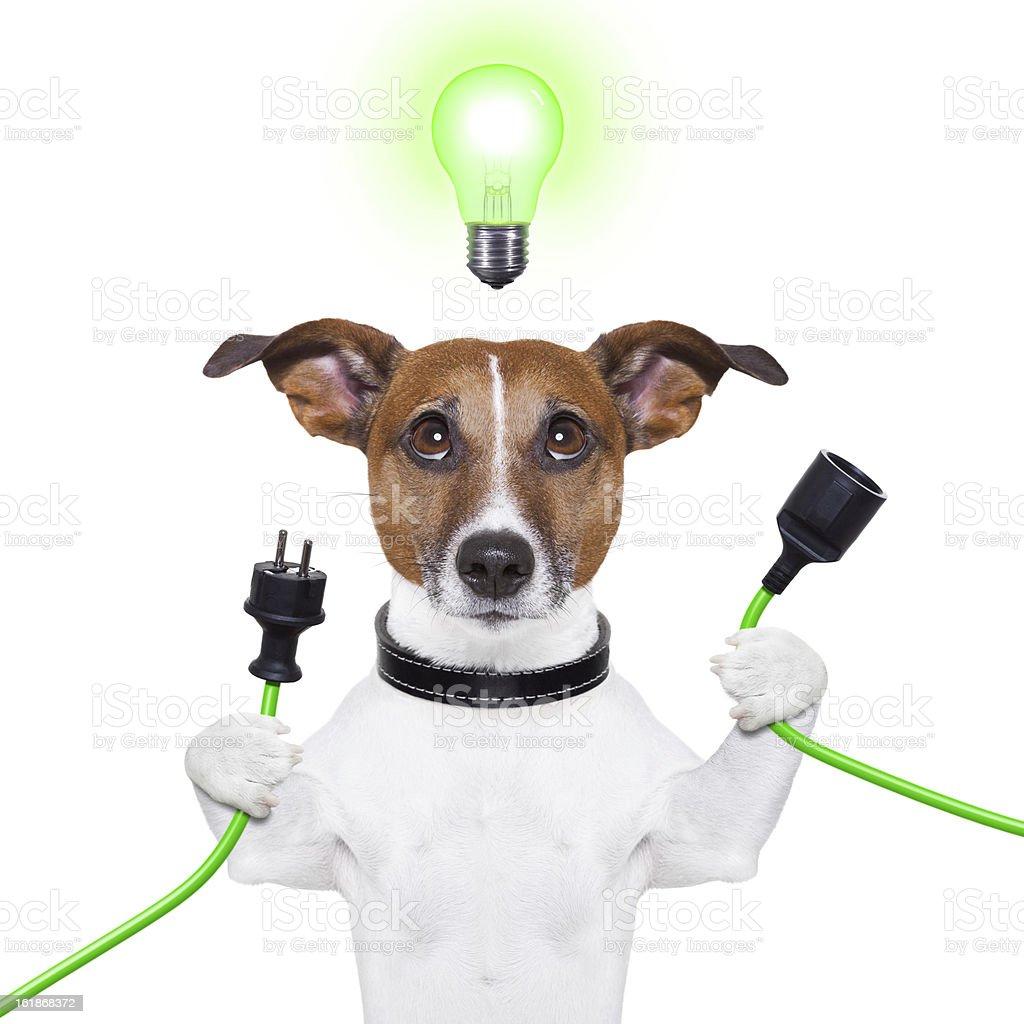 eco dog stock photo