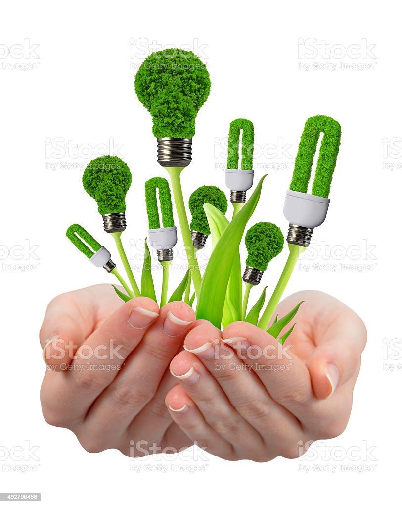 eco energy bulbs in hands stock photo