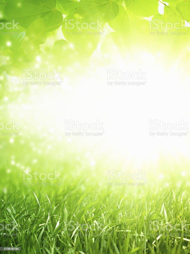 Eco green background stock photo