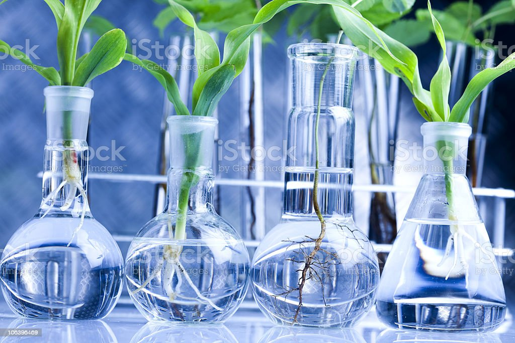 Eco laboratory royalty-free stock photo