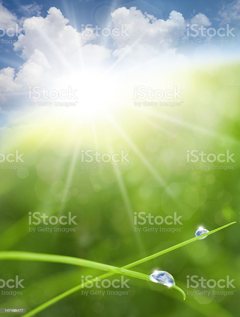 Eco Nature Background with Grass, Sun and Blue Sky Reflections royalty-free stock photo