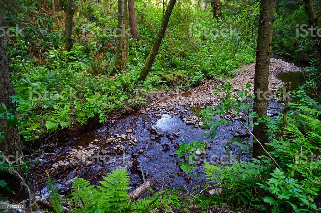 Ecola's Indian Creek stock photo