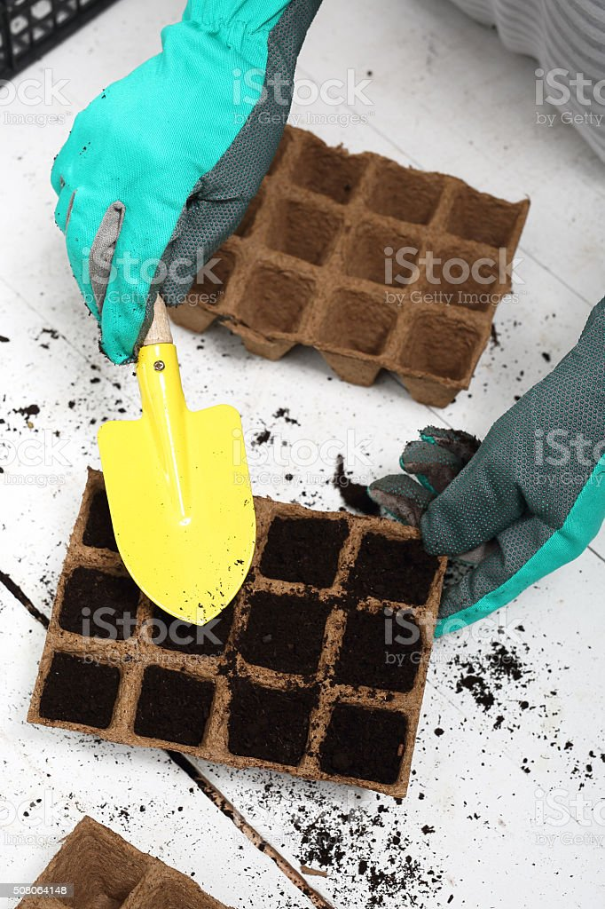 Ecological garden, sowing plants into pots of peat stock photo