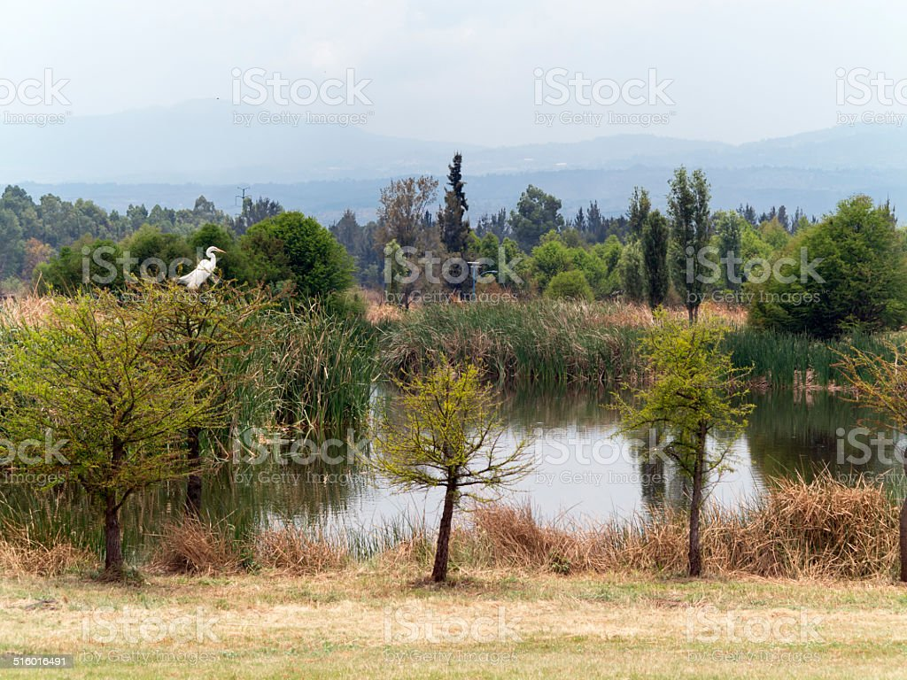 Ecological Park Mexico City stock photo