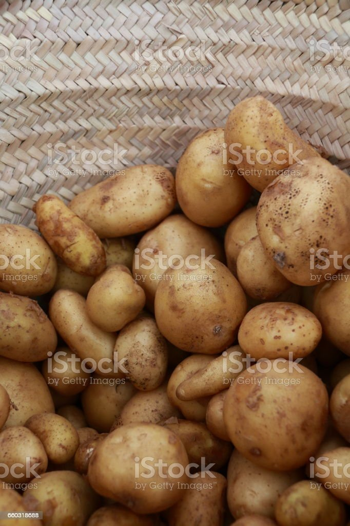 Ecological potato stock photo
