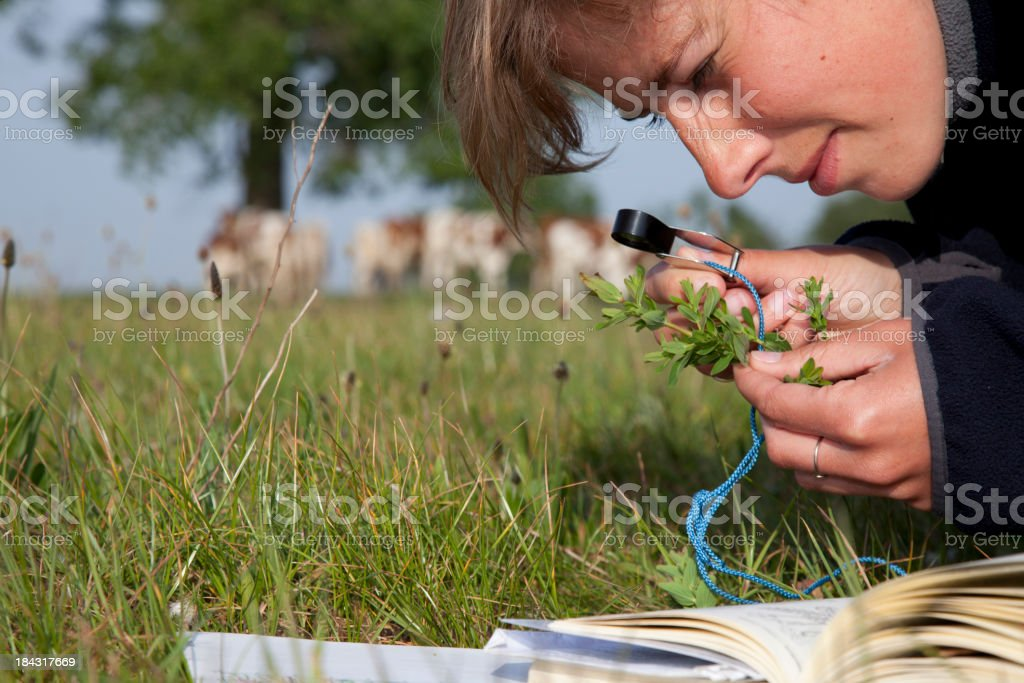 Ecologist determined a plant. stock photo