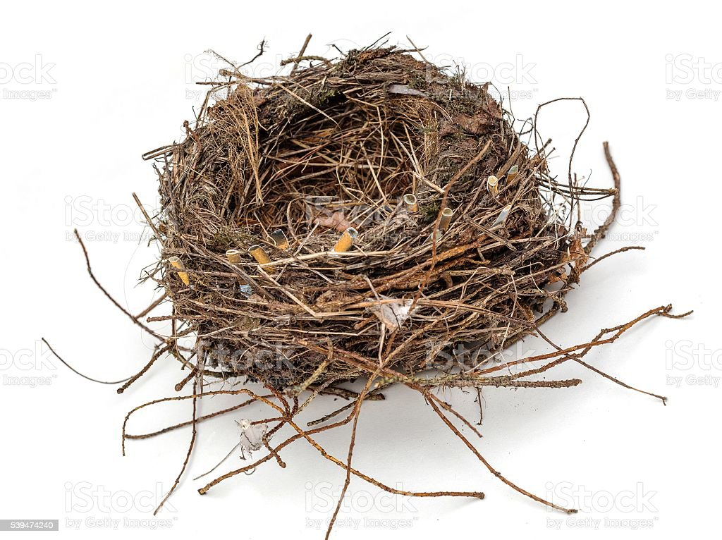 Ecology, a bird's nest with cigarette butts stock photo
