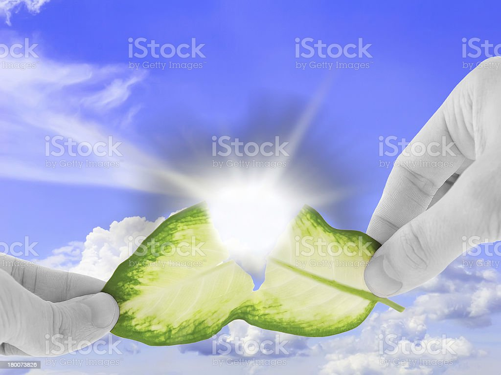 Ecology concept -asunder destroy green leaf stock photo