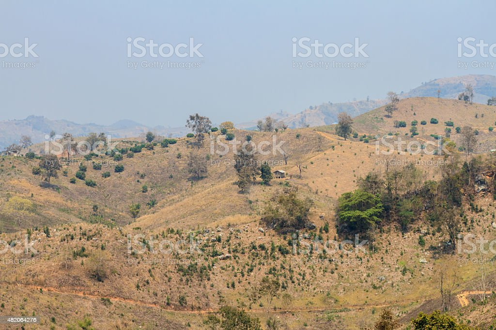 Ecology, global warming and deforestation, forest fires, drought stock photo