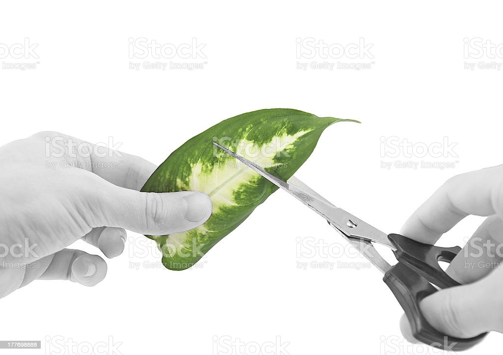 Ecology -green leaf in glass of water. stock photo