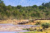 Ecotourism. Photo safari in Africa. Masai Mara, Kenya