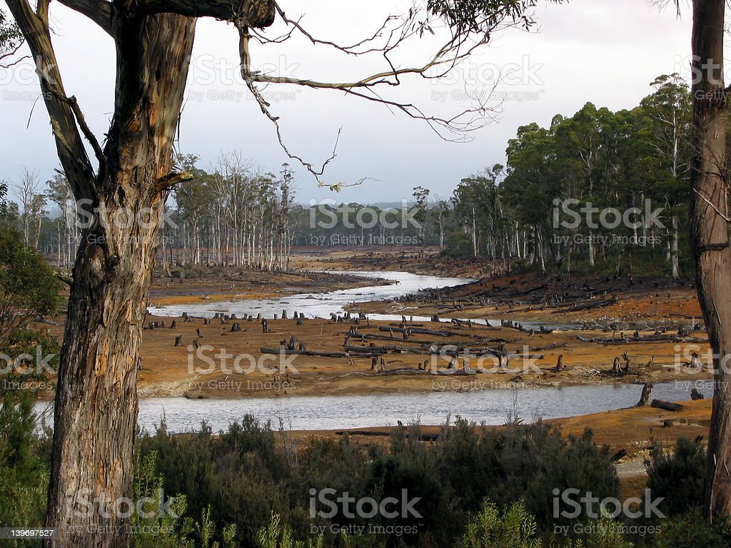 eco-vandalism in Tasmanian forests3 royalty-free stock photo