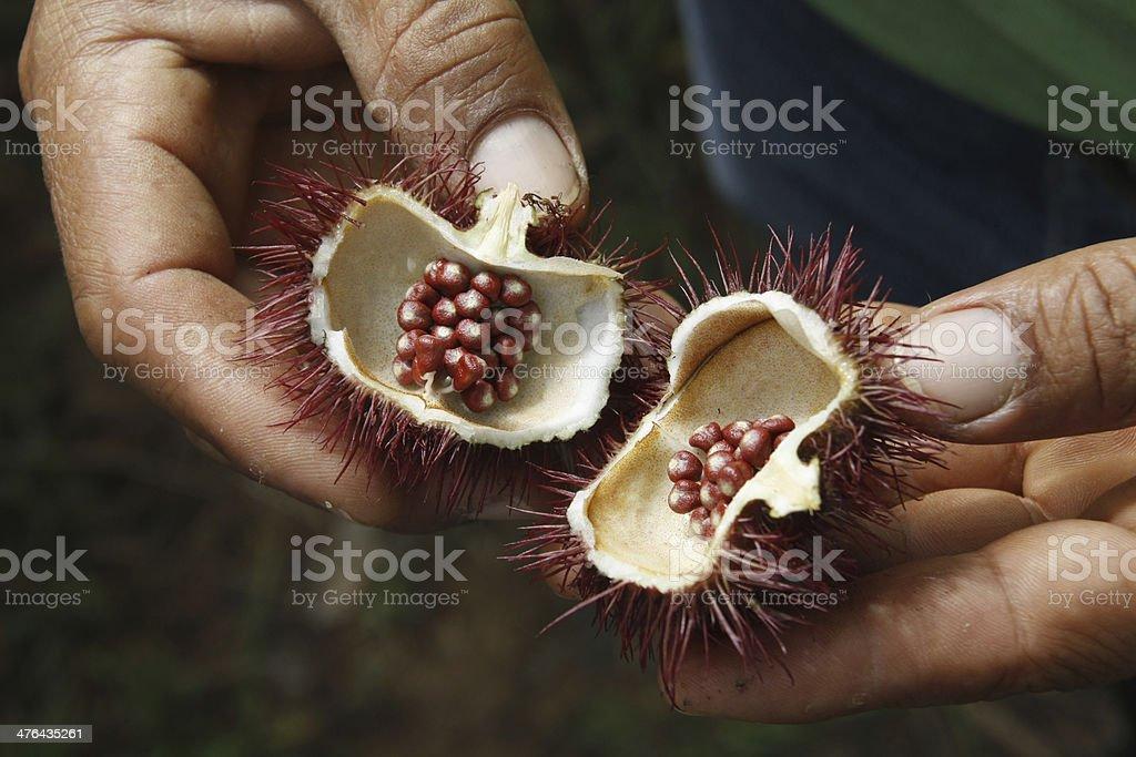 Ecuadorian bixa seeds royalty-free stock photo
