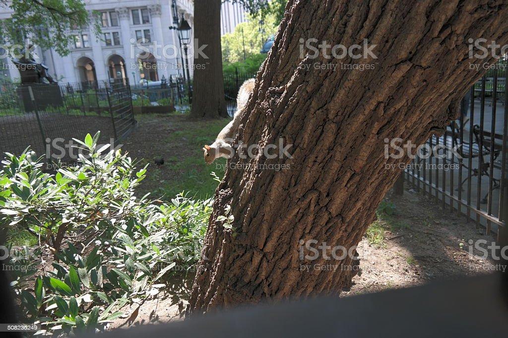 Ecureuil à New York photo libre de droits