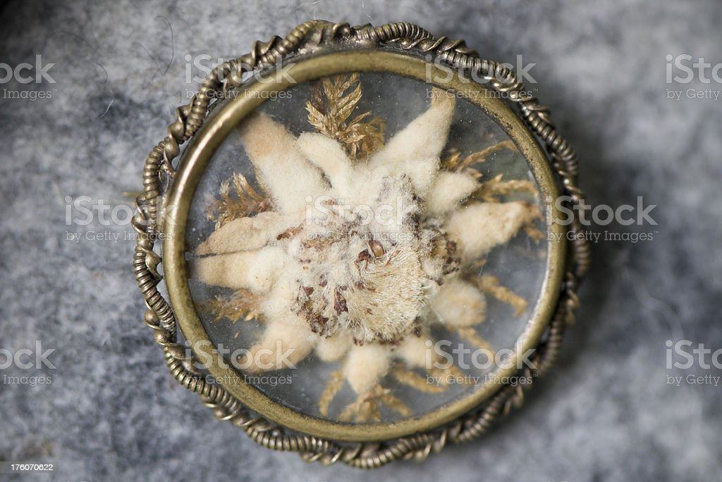 Edelweiss broche, close-up, hunter's accessory royalty-free stock photo