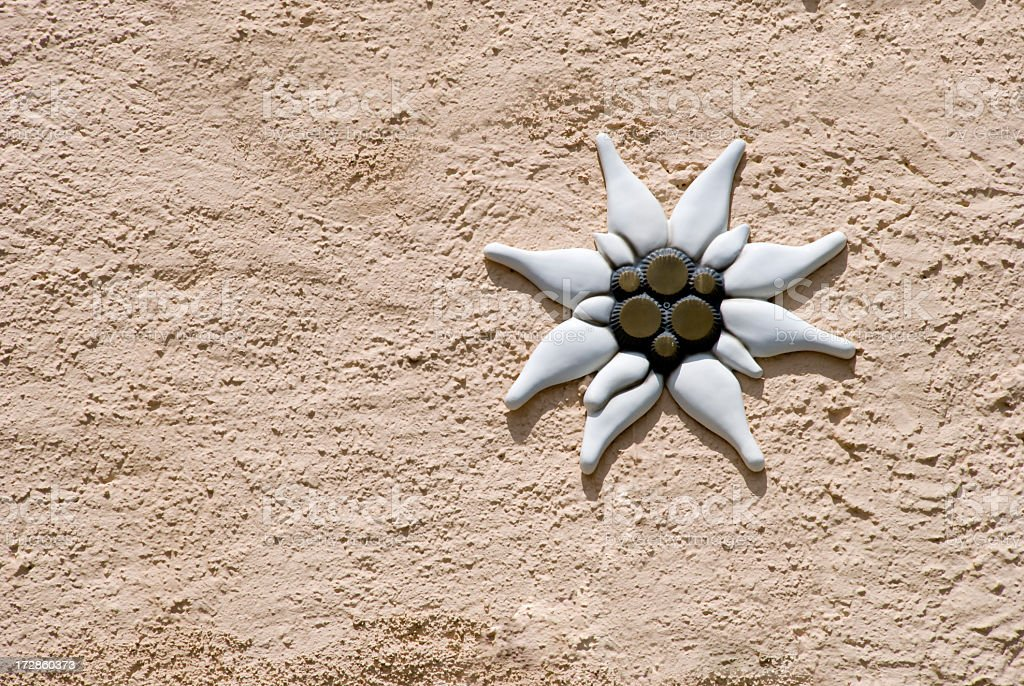 Edelweiss decoration on a rough stucco wall royalty-free stock photo