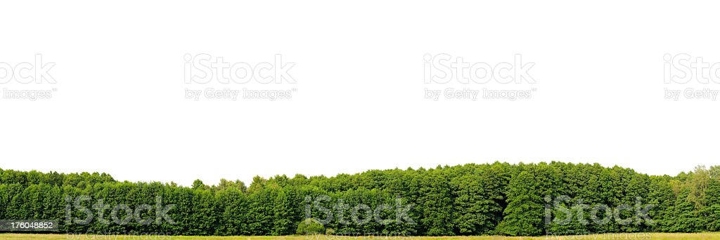 Edge of a wood isolated on white, hugeresolution. (Alnus glutinosa) stock photo