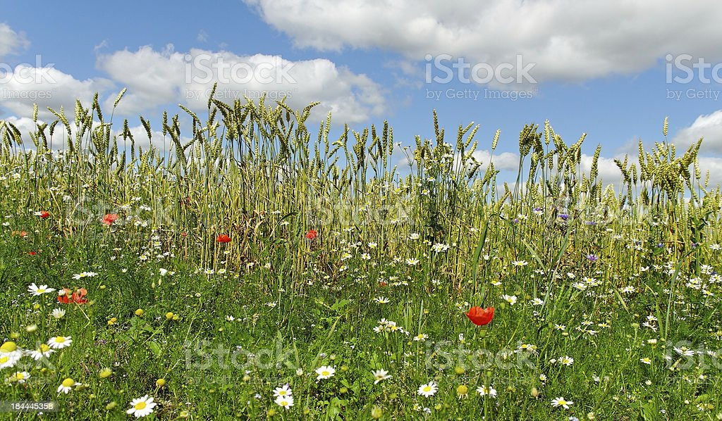 Edge of field. royalty-free stock photo