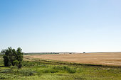 Edge of harvested wheat field, rural landscape