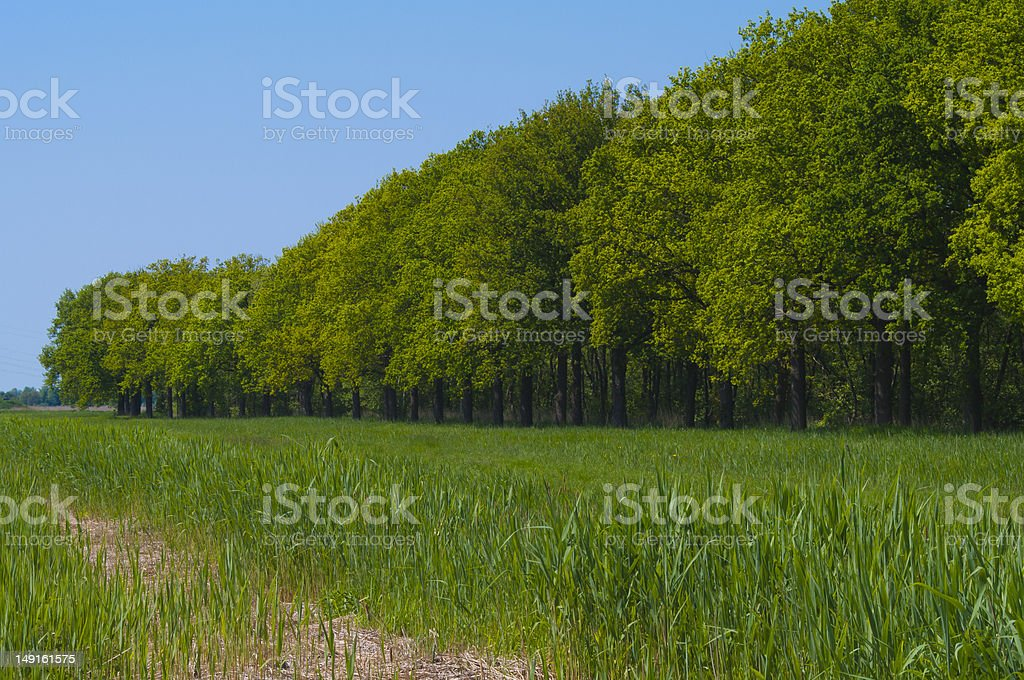 Edge of lush green forest with a bright blue sky stock photo