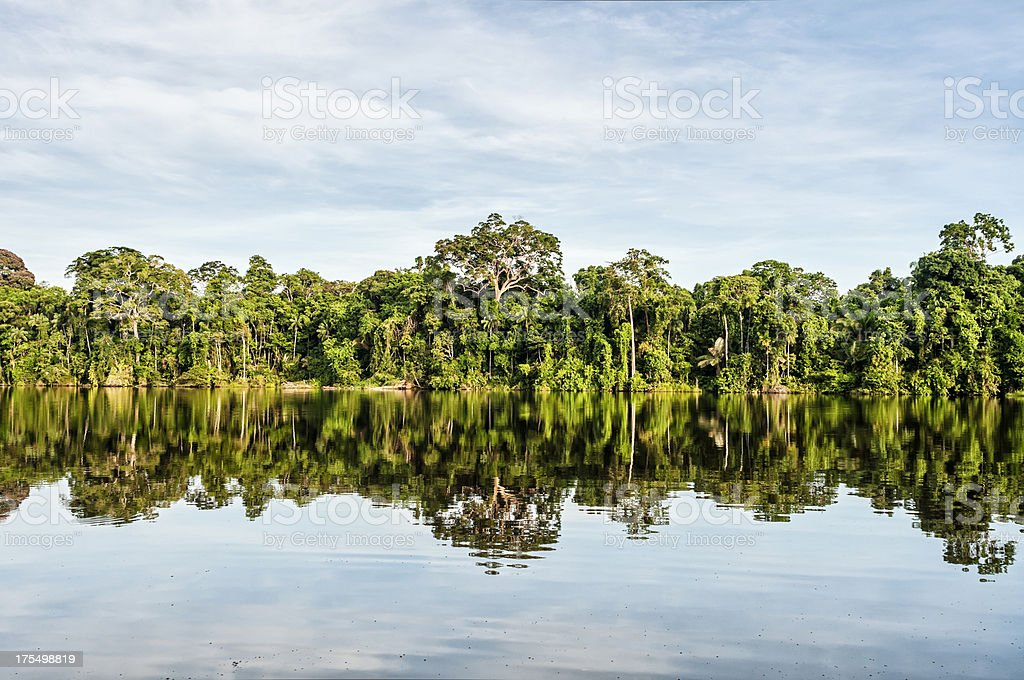 Edge of Peruvian rainforest along a calm lake stock photo