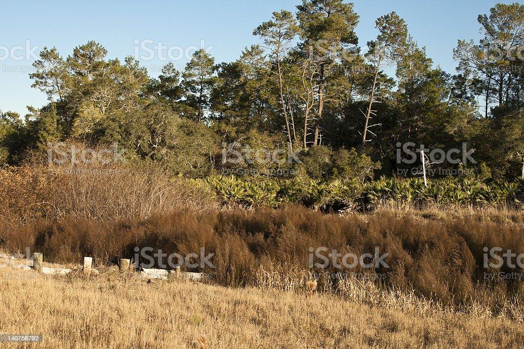 Edge of the Marsh stock photo