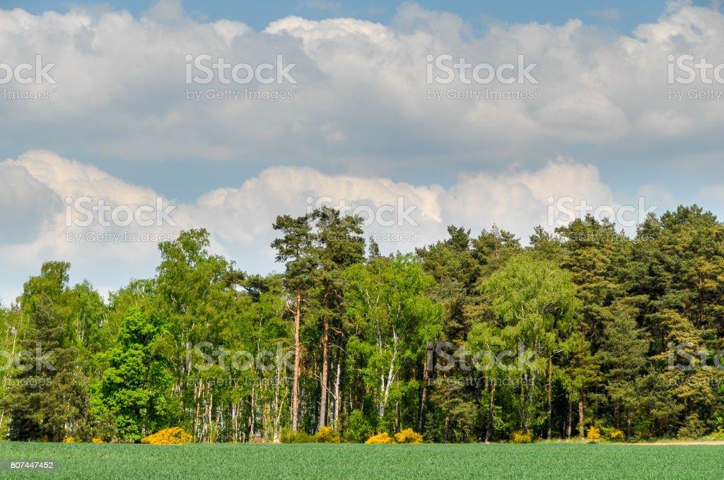 Edge of the wood stock photo