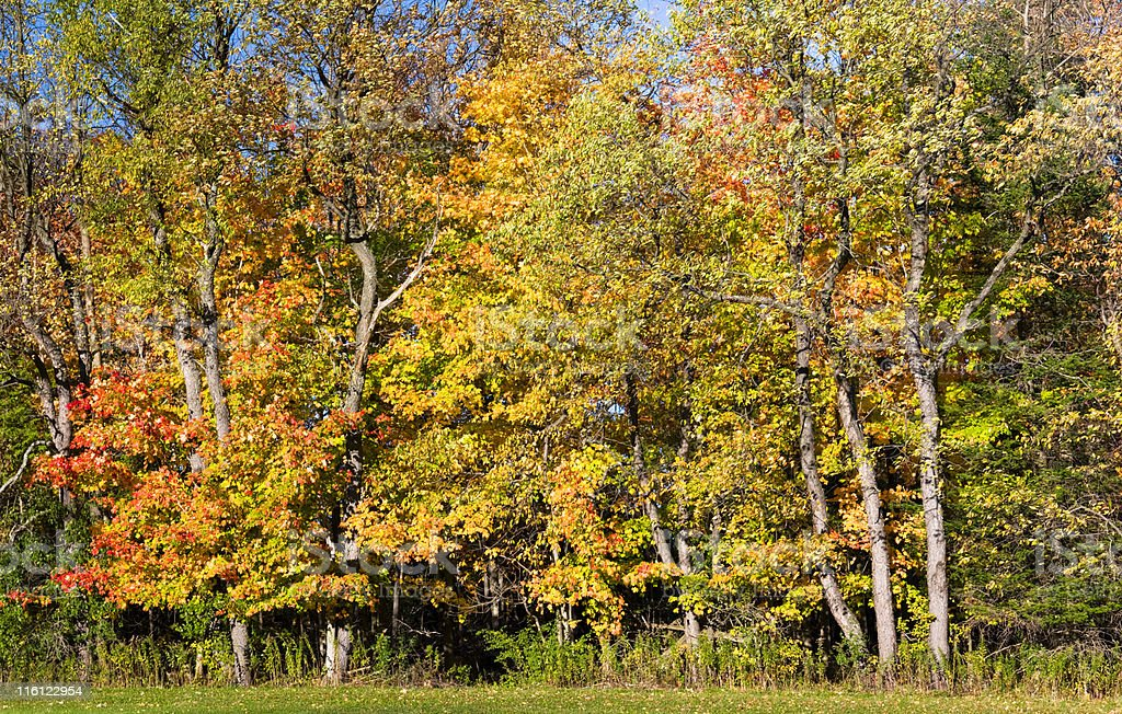 Edge of the woods in autumn royalty-free stock photo