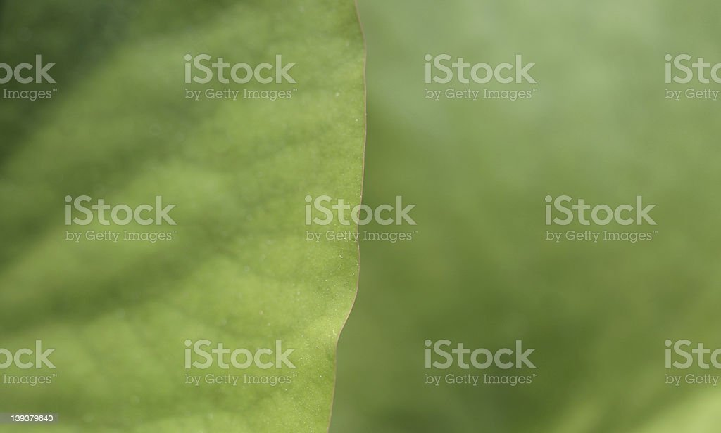 Edge of waterlilly royalty-free stock photo