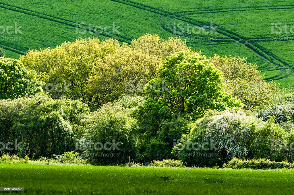 Edge-lit cluster of trees in download location stock photo