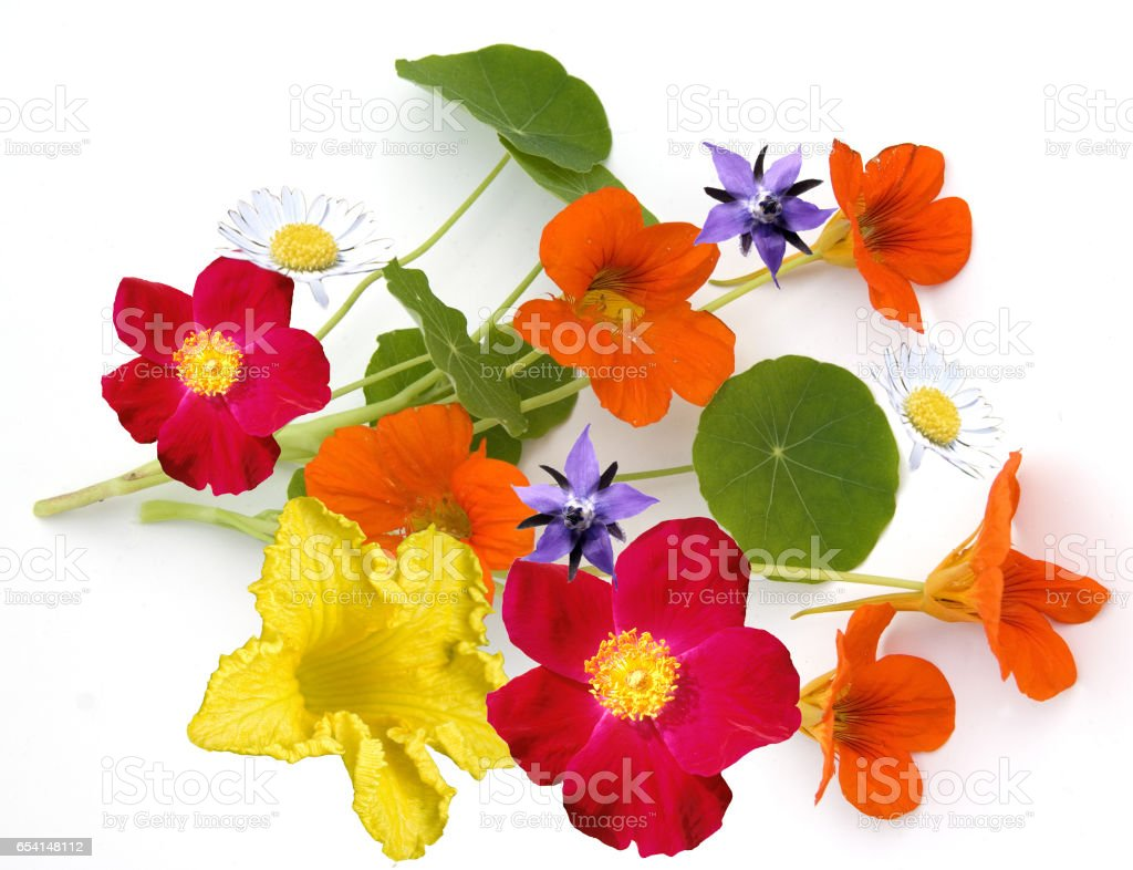 edible; blossom; eat; flower stock photo