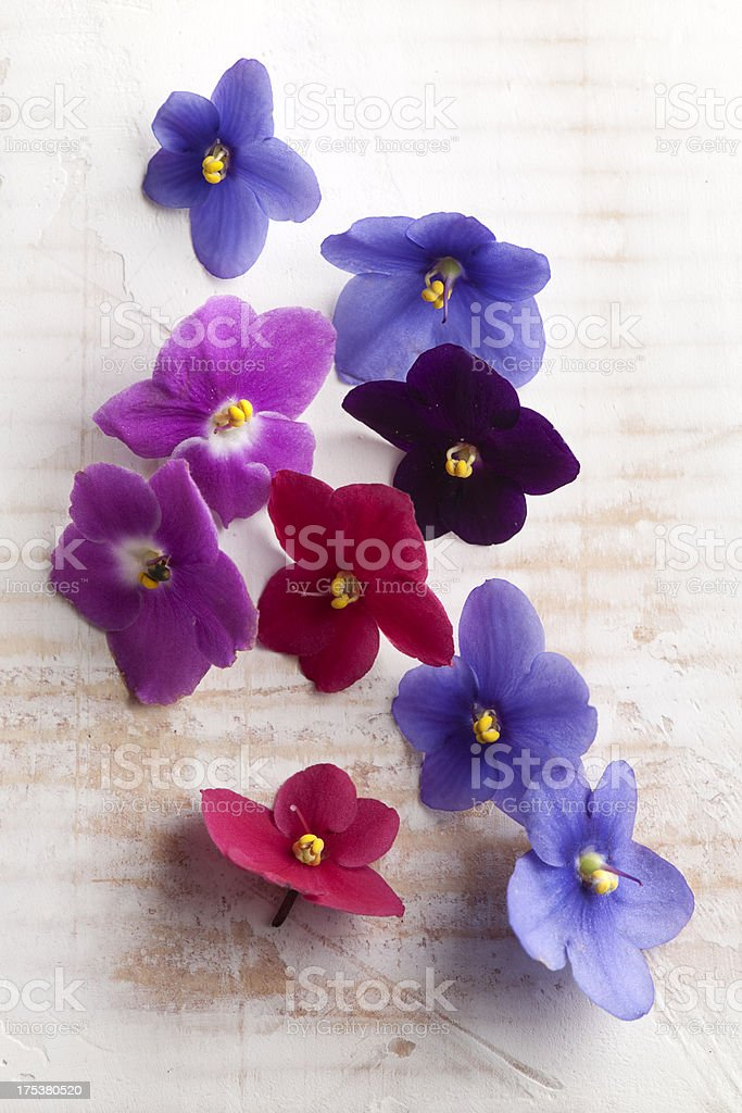 Edible flowers. stock photo