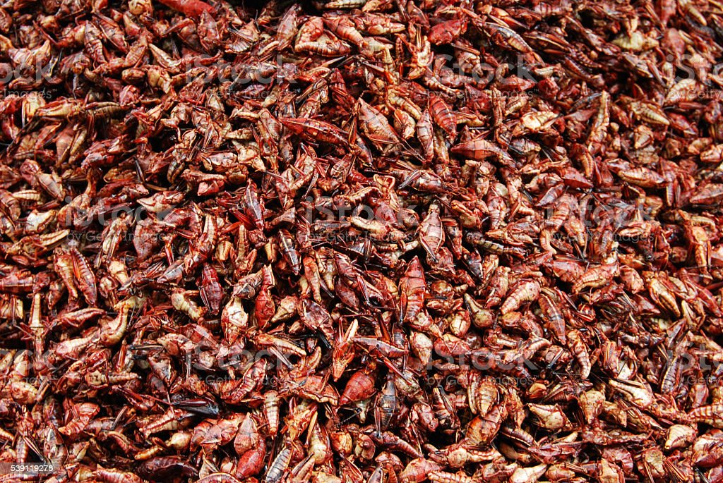 chapulines enchilados, edible grasshoppers stock photo