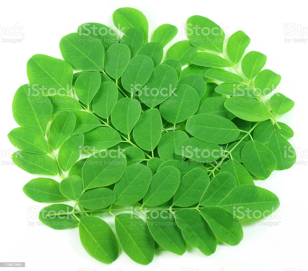 Edible moringa leaves royalty-free stock photo