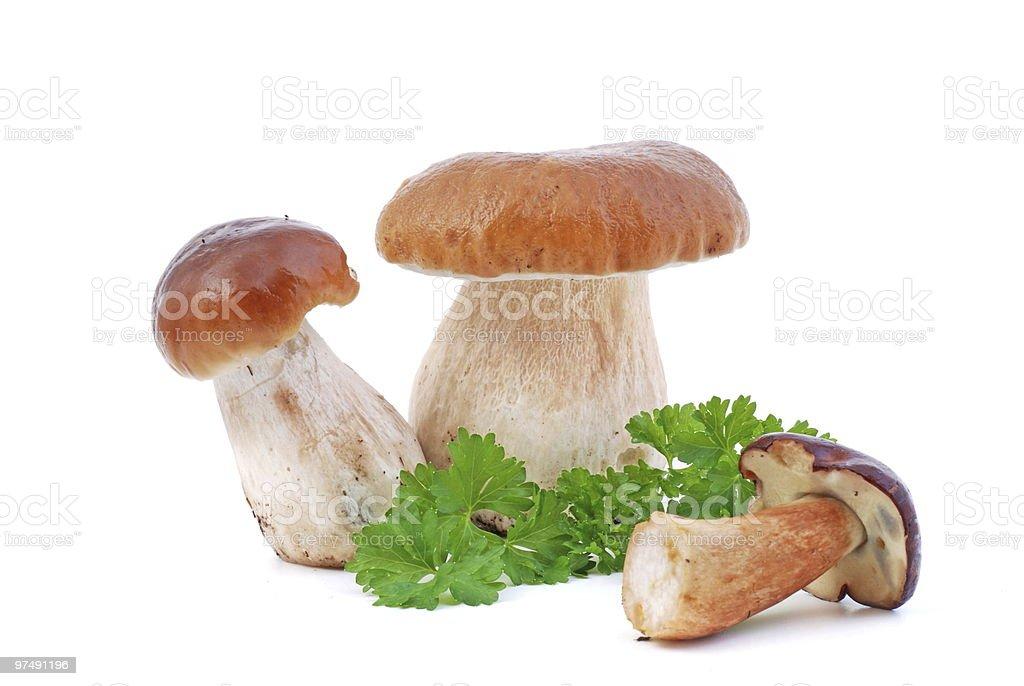 Edible Mushroom royalty-free stock photo