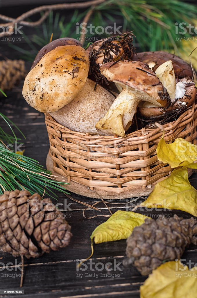 Edible mushrooms collected in the forest. stock photo