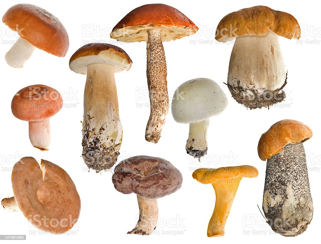 edible mushrooms collection royalty-free stock photo