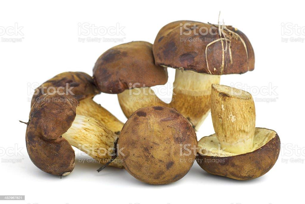 Cogumelos comestíveis (Boletus edulis) foto de stock royalty-free