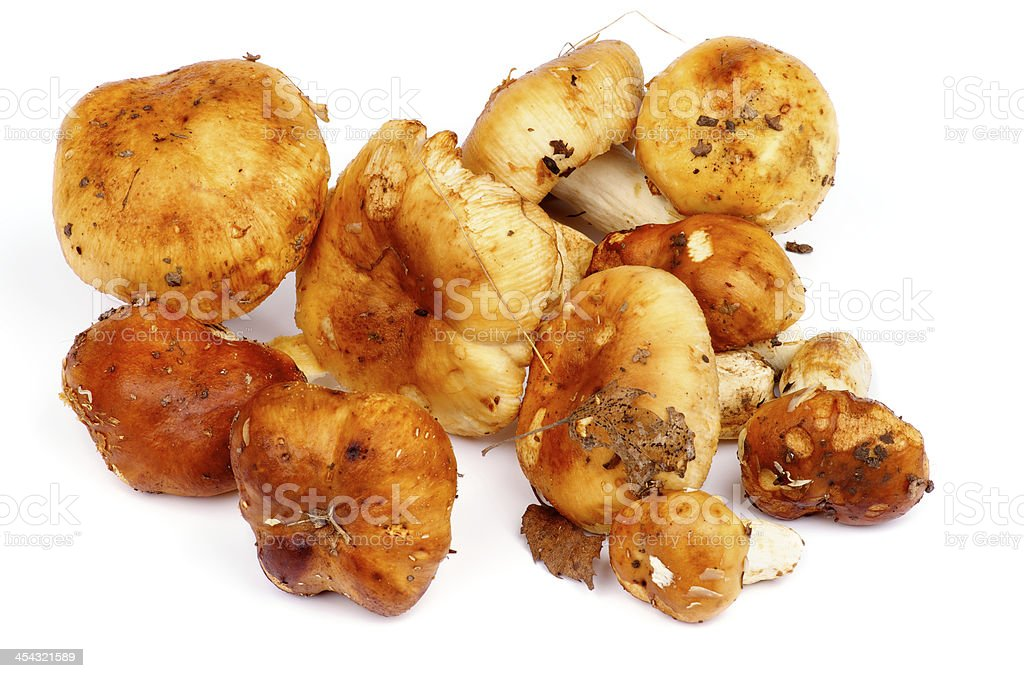 Edible Mushrooms stock photo