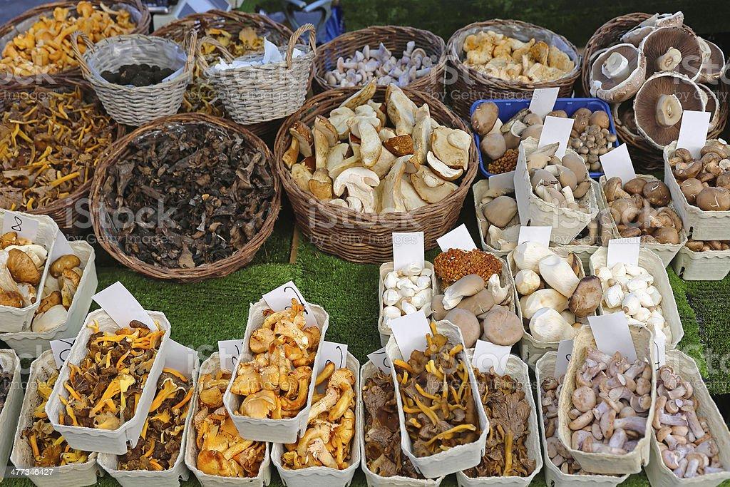 Edible mushrooms royalty-free stock photo