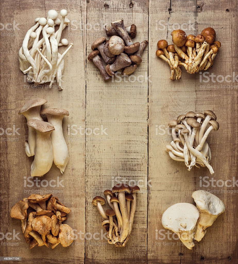 Edible Mushrooms stock photo