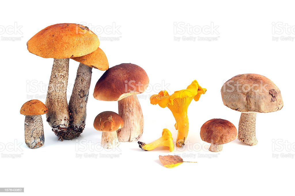 edible mushrooms - Porcini Mushroom and more stock photo
