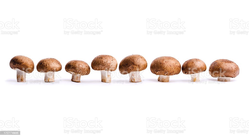 Edible Portabello Mushrooms, Vegetables in a Row, Isolated on White stock photo