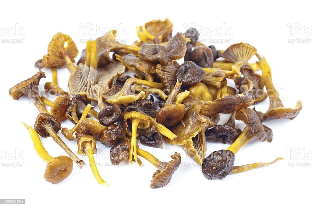 Edible yellowfoot mushrooms royalty-free stock photo
