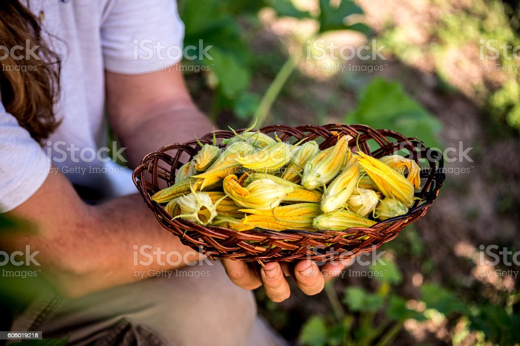 Edible Zucchini Flower stock photo