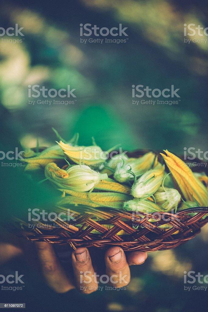 Edible Zuccihni Flowers stock photo