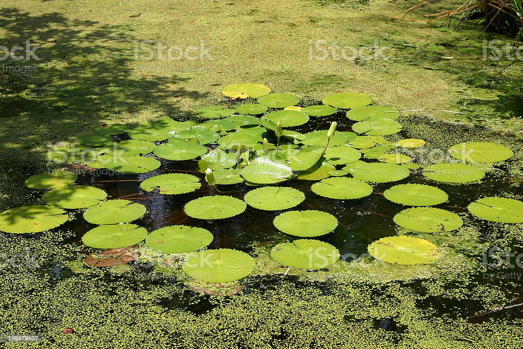 Edison Swamp stock photo