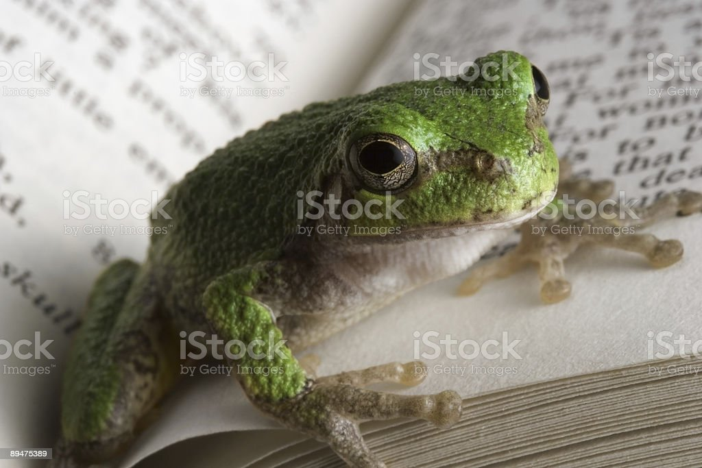Educated Frog royalty-free stock photo