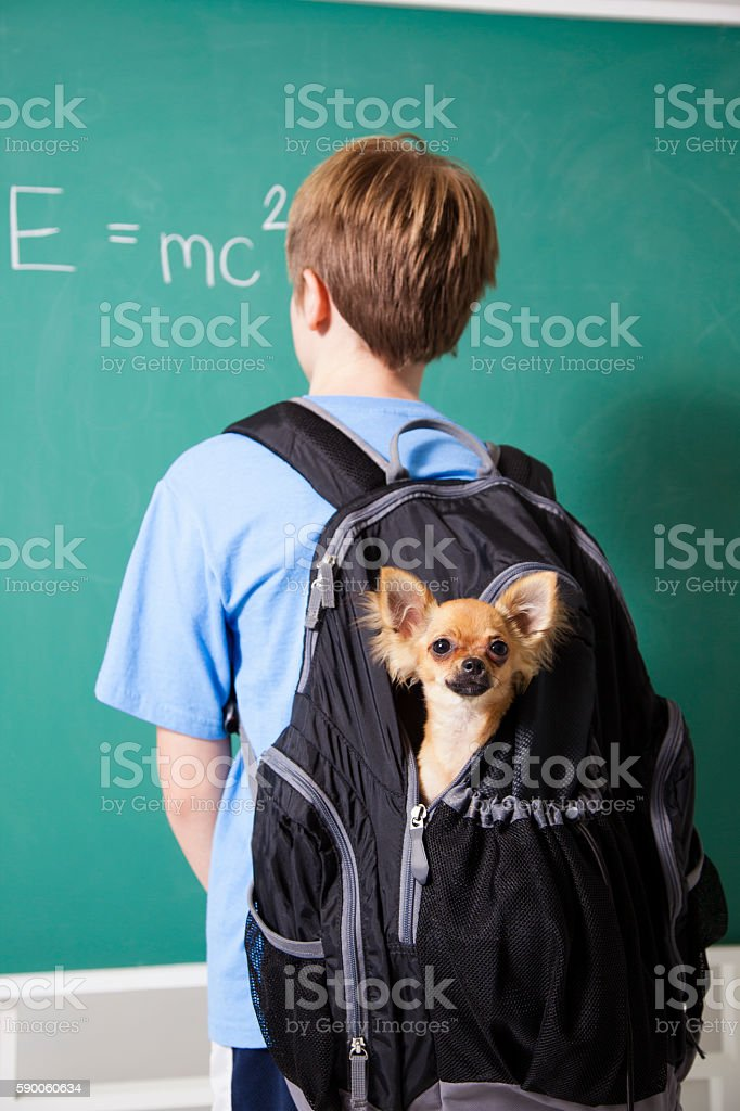 Education: Pre-teenage student brings his pet dog back to school. stock photo
